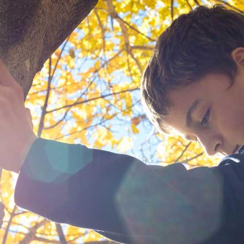 der-wanderfuehrer Junge steht an einem Baum, bei einem Programm im Wald